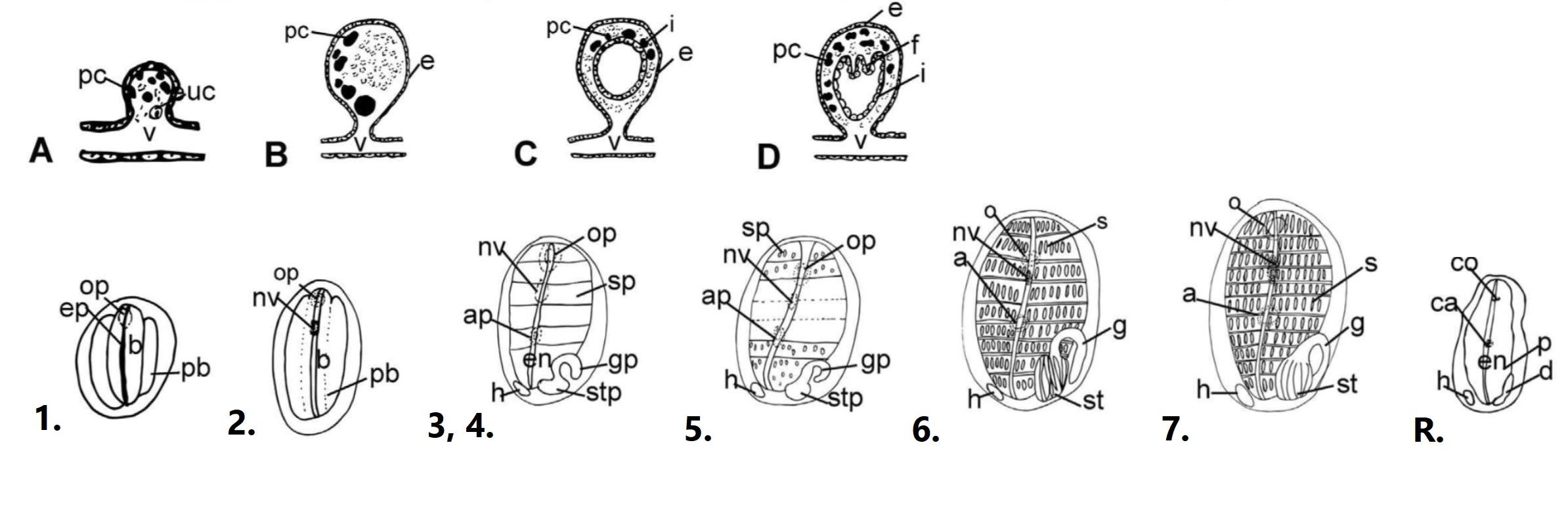 figure image